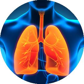 pulmunologia_lung