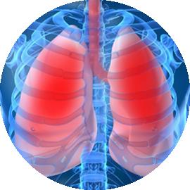 pulmunologia_myko